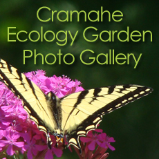 Cramahe Ecology Garden Photo Gallery